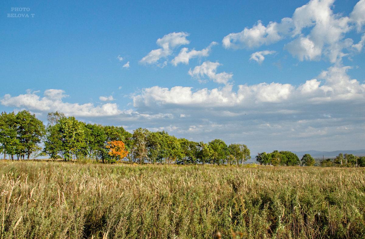 обычный осенний пейзаж - Tatyana Belova