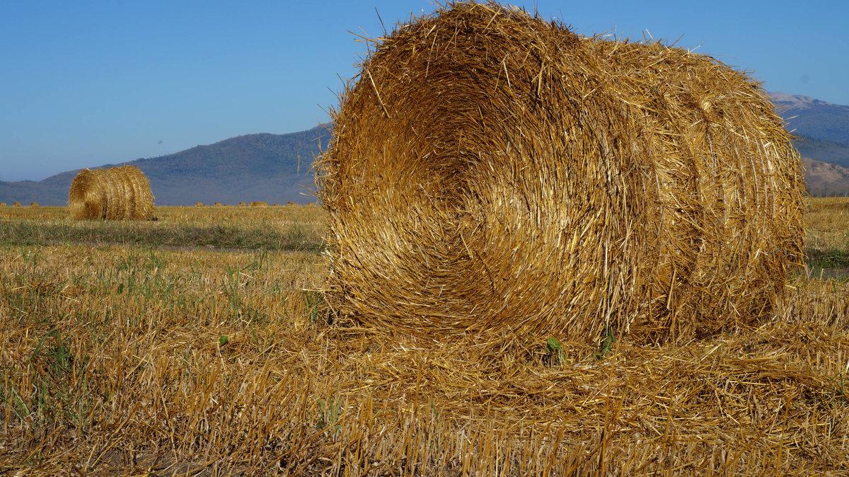 осень в поле... - Alexandr Staroverov