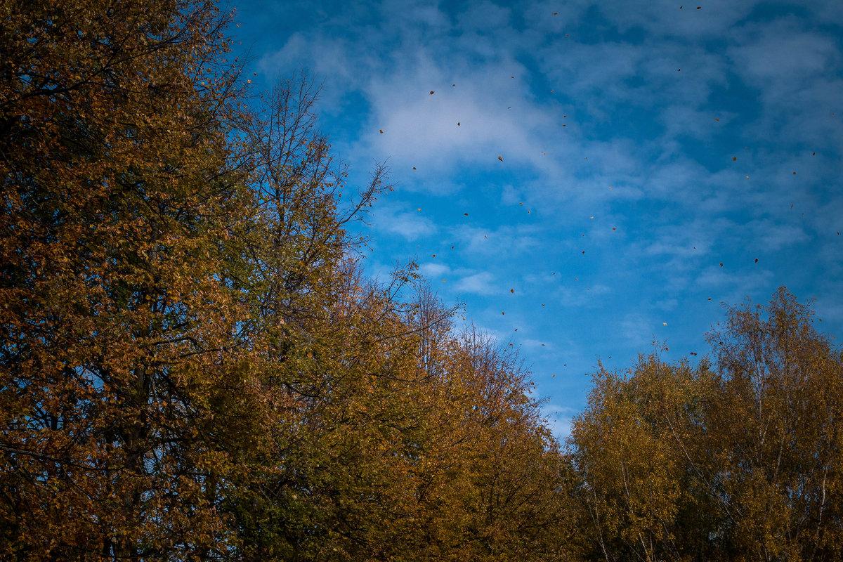 Осень .... - Юлия Сургучёва