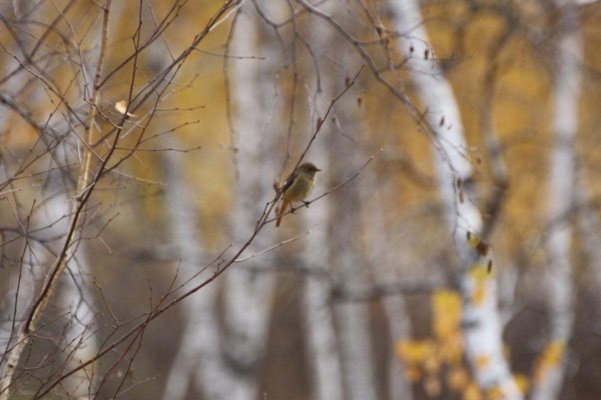 в осеннем лесу - Анна