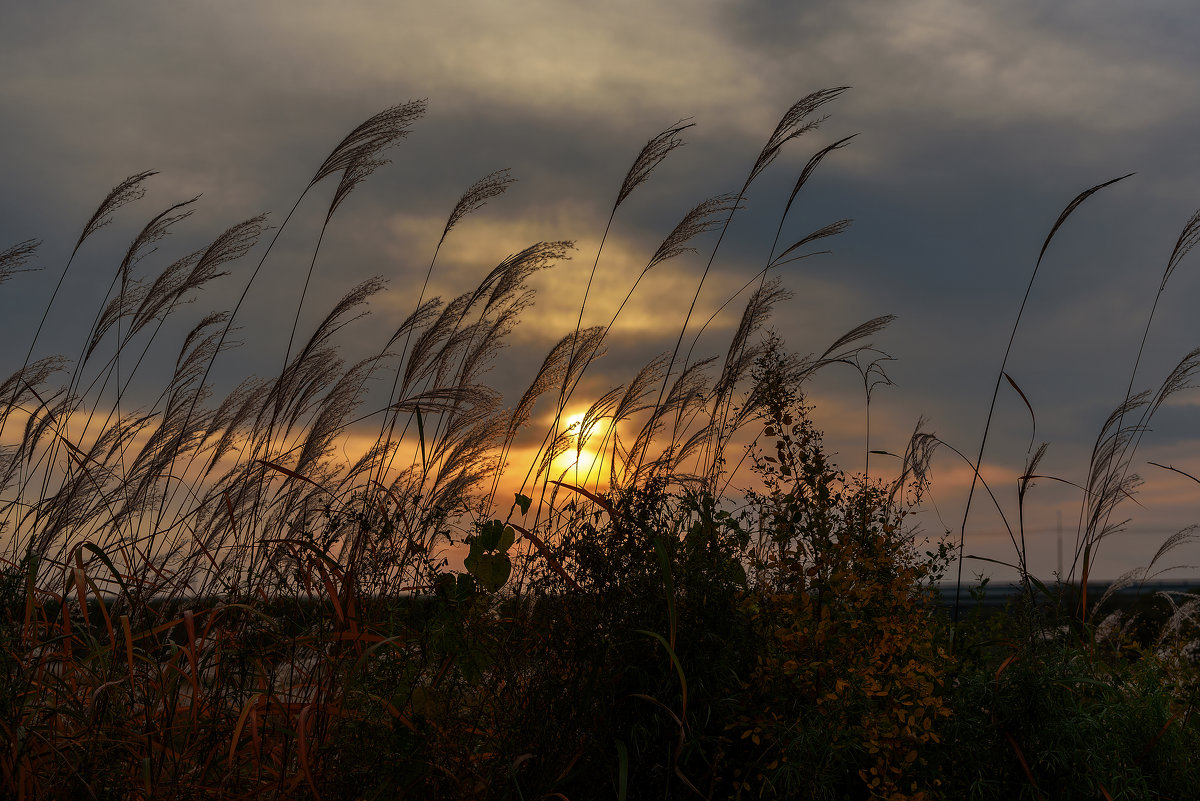 Осенним вечером - Евгений Хвальчев