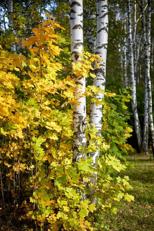 Осень золотая - Сергей Козлов