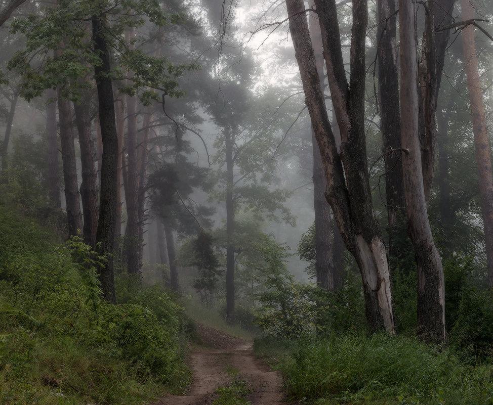 Путь через лес - Михаил Корнилов