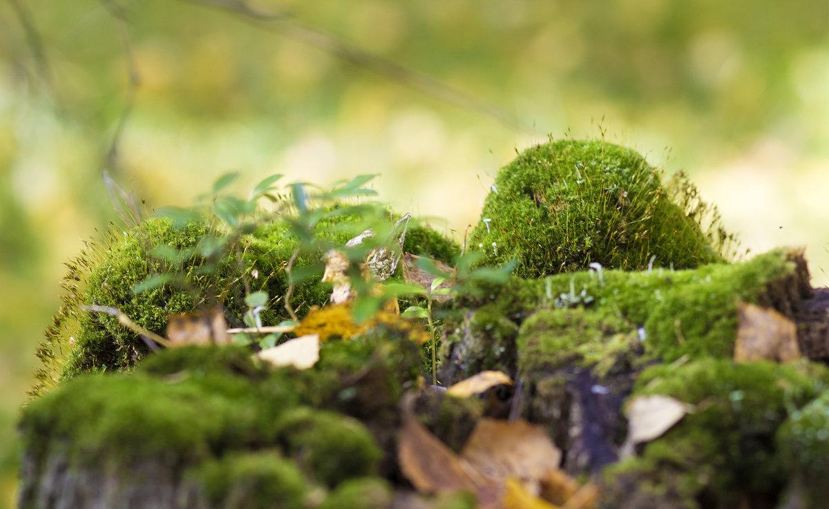 Лес в лесу. - Андрей Леднев