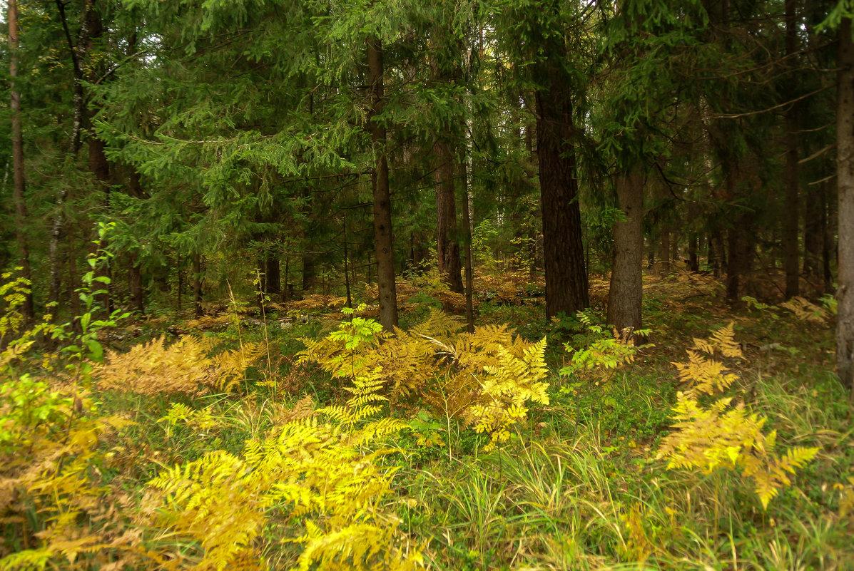 В темный лес дремучий Осень заглянула,разбросала всюду краски золотые.. - Алла Кочергина