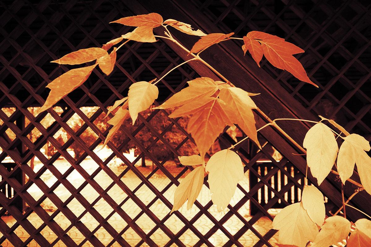 Рыжие листья осени - Екатерина Торганская