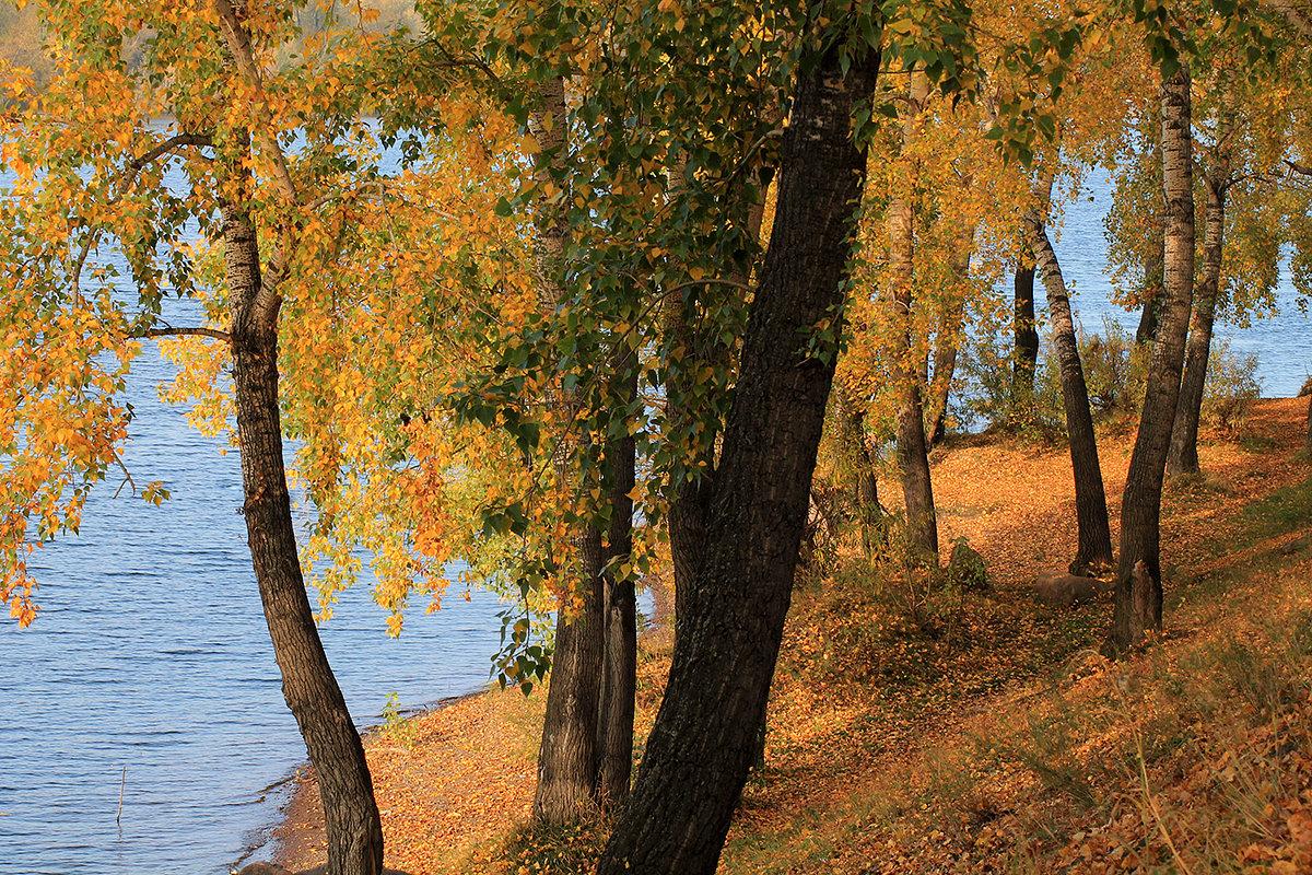 Осень шагает по берегам реки - Екатерина Торганская