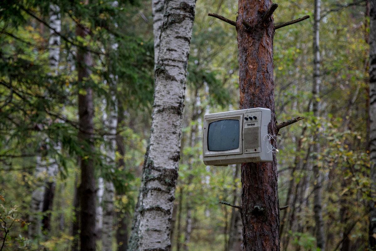 В лесу как дома! - ИГОРЬ ЧЕРКАСОВ