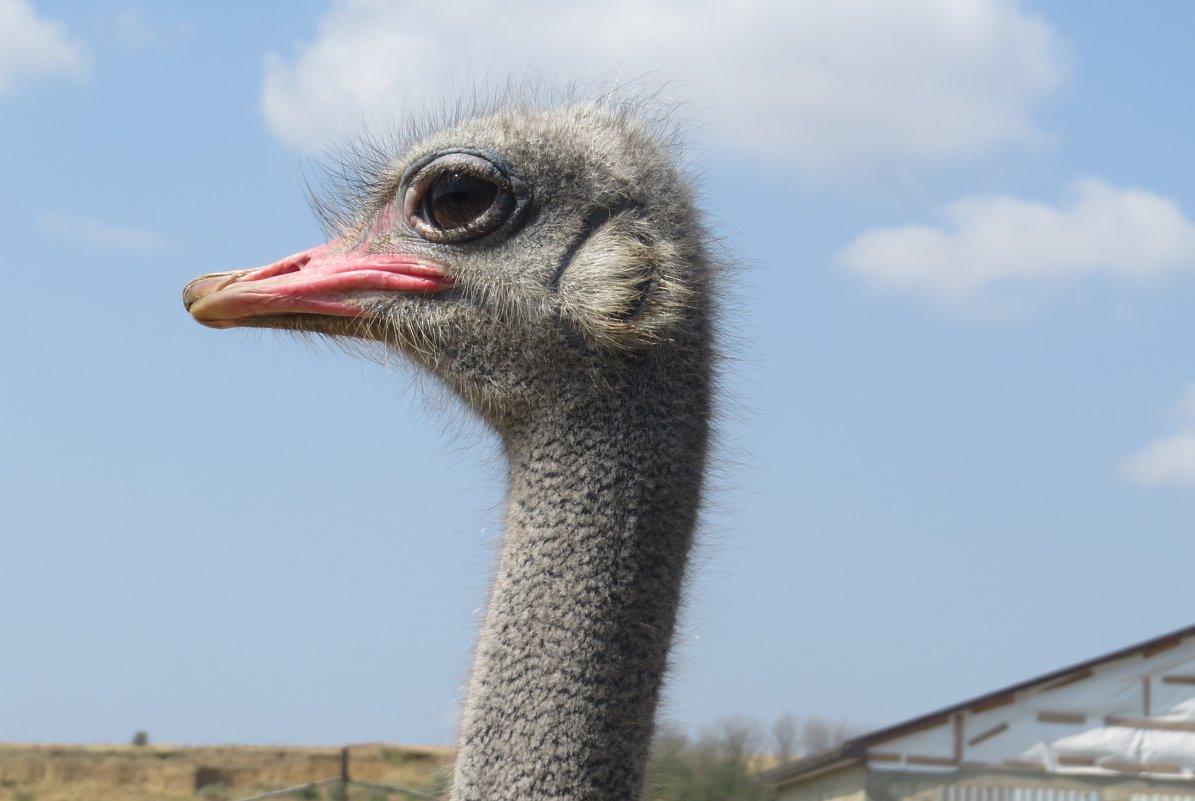 Гордый страус - Вера Щукина
