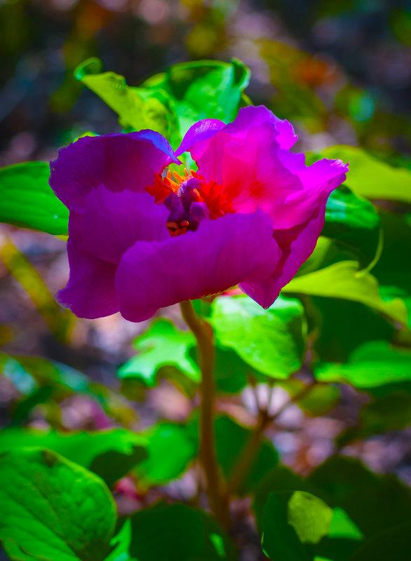 цветок - Таня