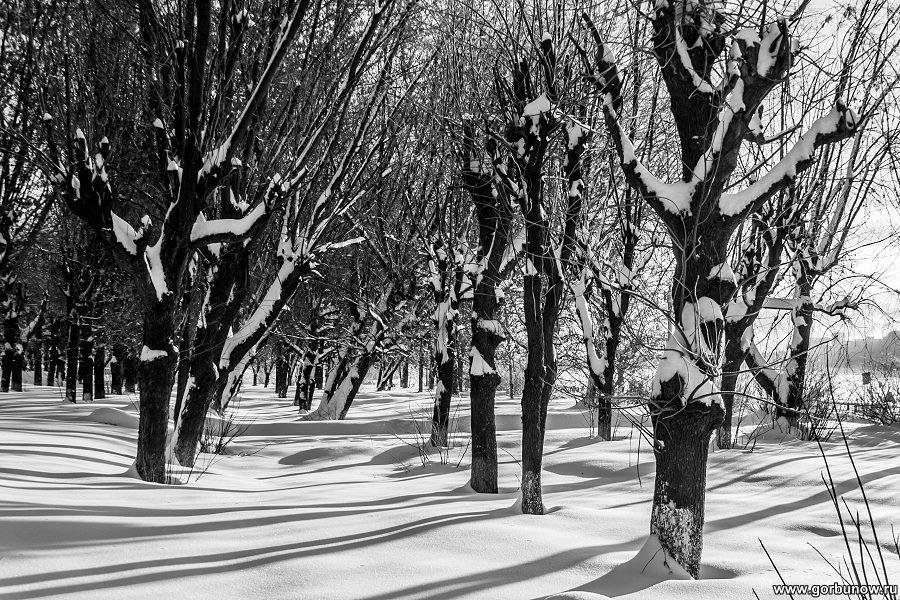 Контрасты зимы - Александр Горбунов