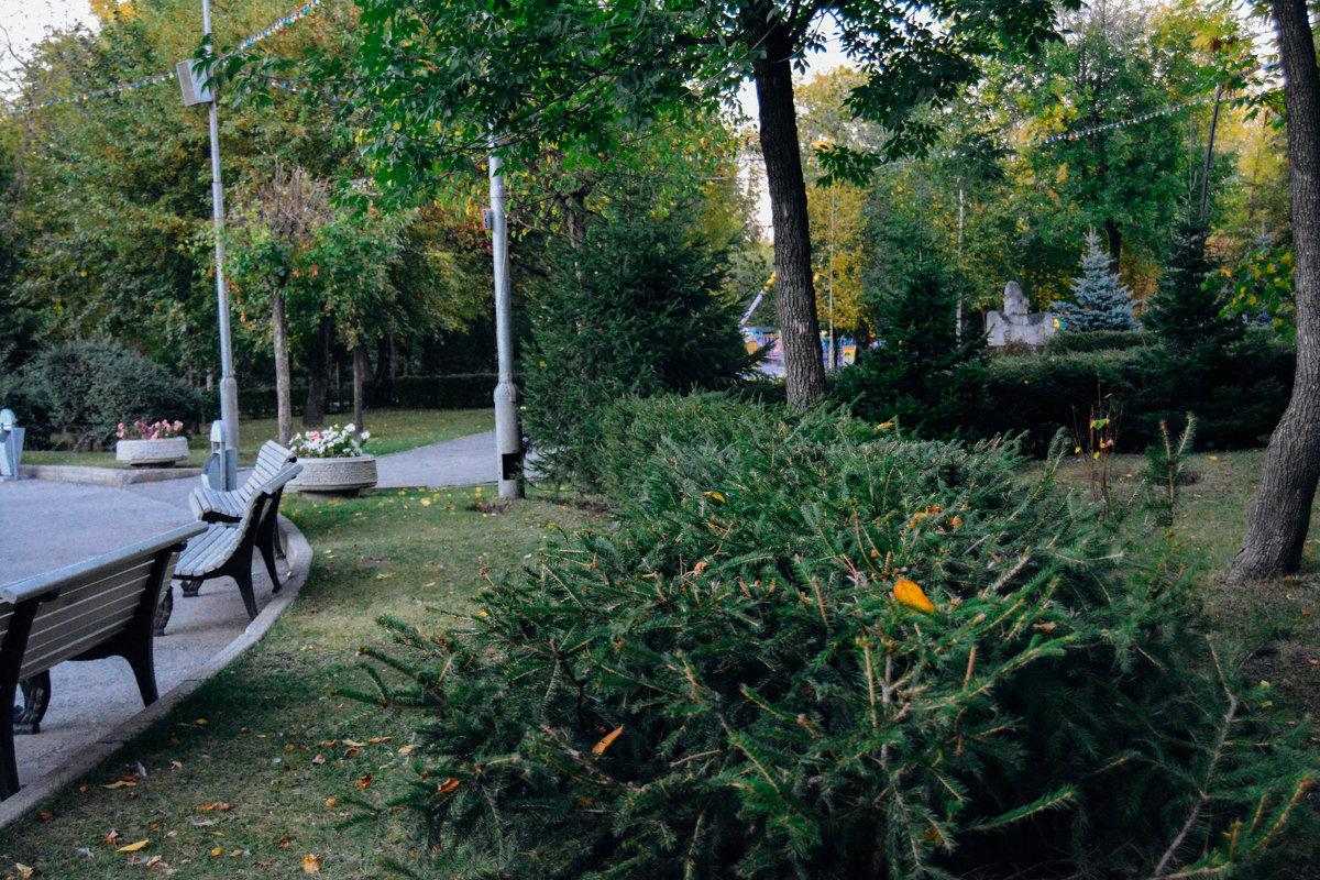 Зелёные кусты - Света Кондрашова