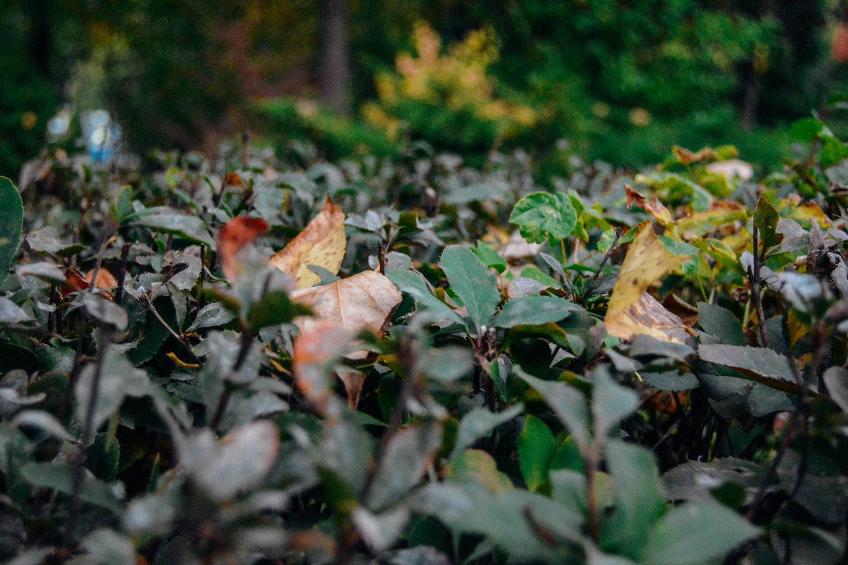 Листья куста - Света Кондрашова