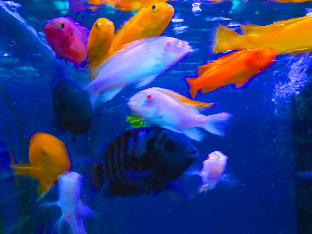 рыбы - Таня
