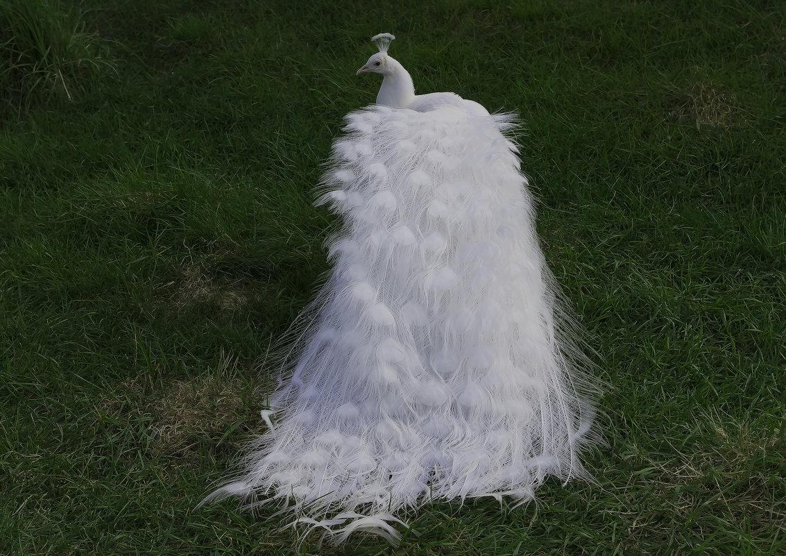 Дефиле белой королевы - Владимир Максимов