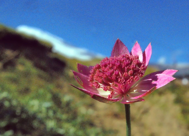 Горный цветок - Владимир Клюев