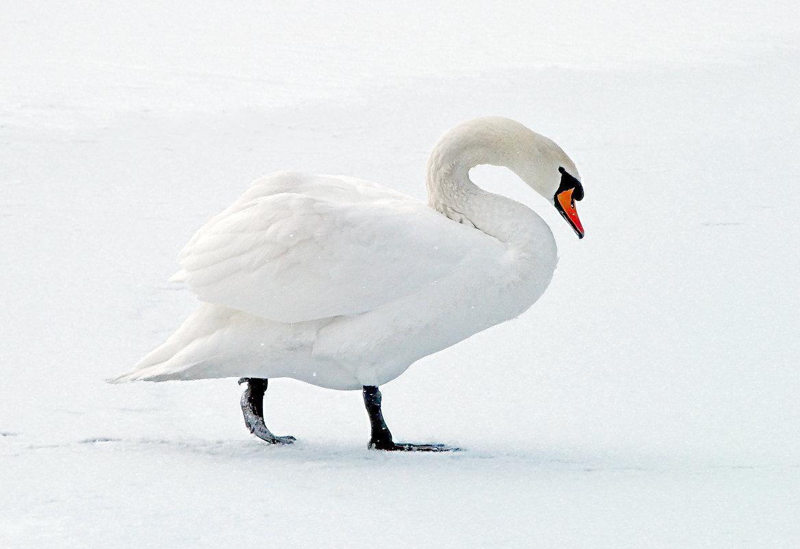 Белая зима. - Наталья