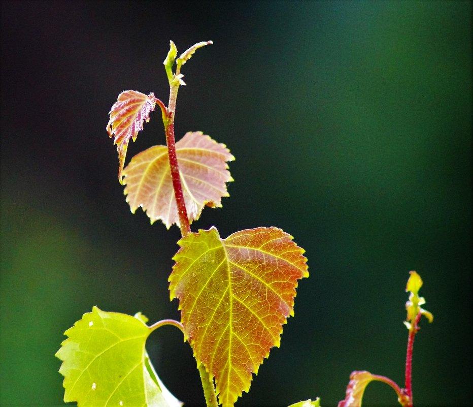 Свежие листья - Сергей Чиняев