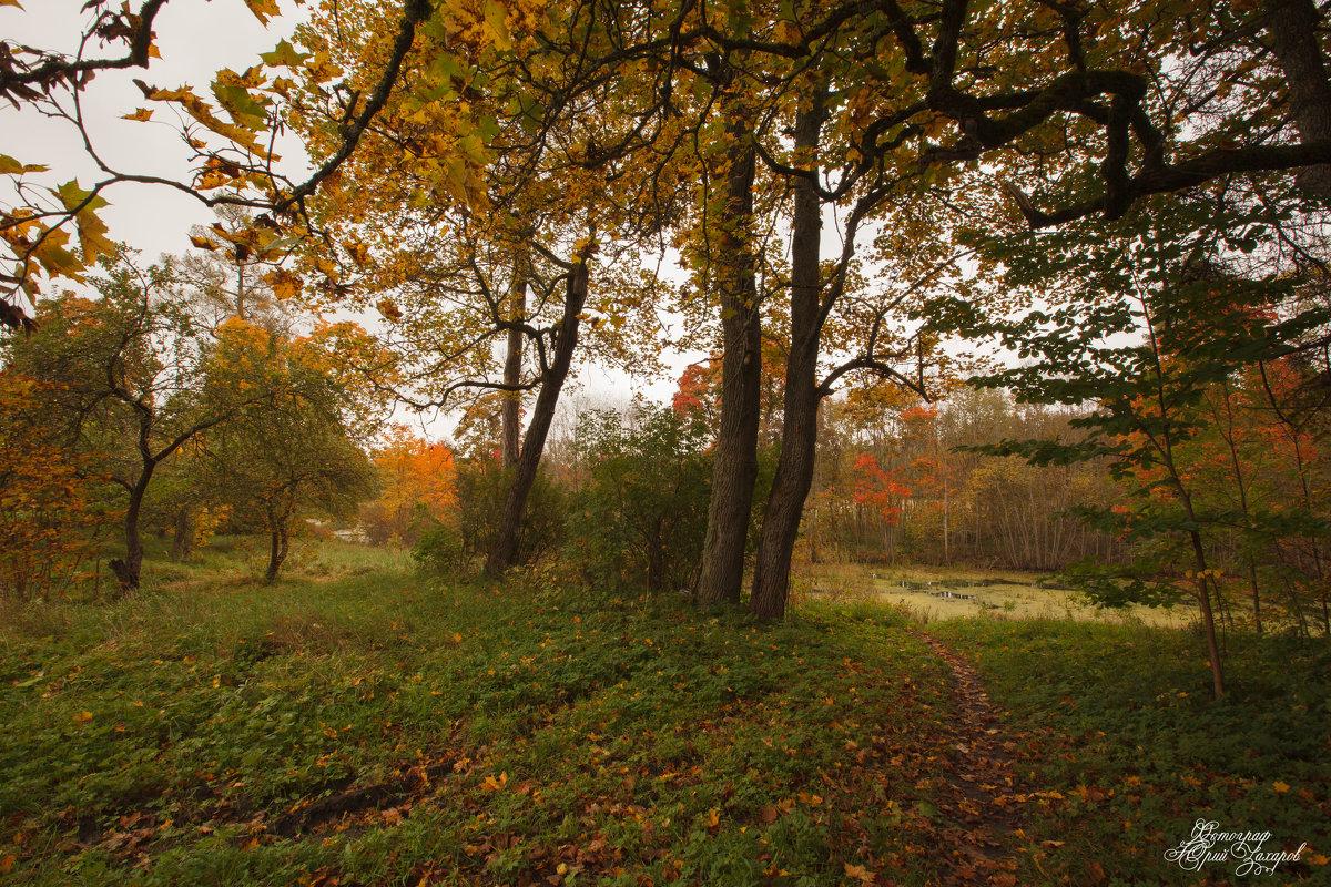 Осень - Юрий Захаров