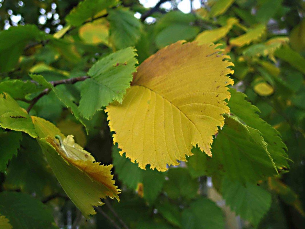 Осенний лист - Елена Семигина