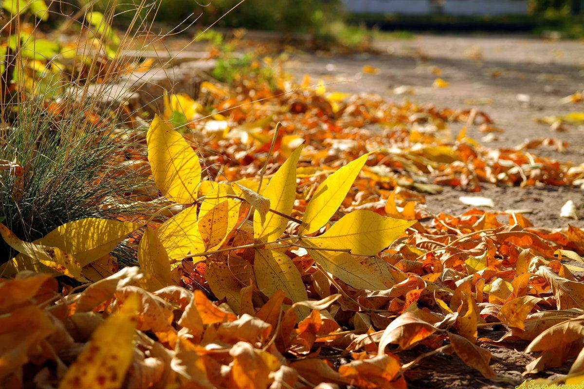 Золотой листопад - Андрей Заломленков