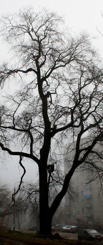 Вот такое  дерево....... - Валерия  Полещикова