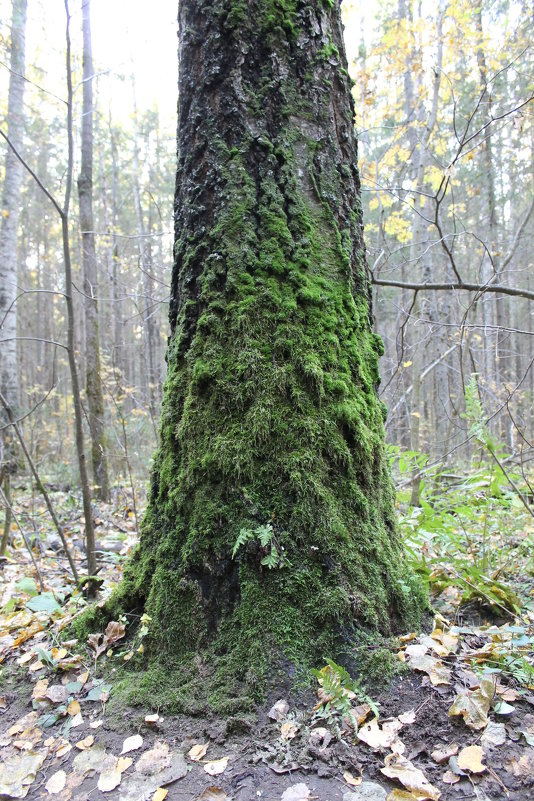 Осень в лесах у Гайвы - Валерий Конев