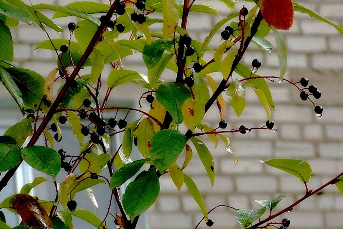 Ягодки-2 - Фотогруппа Весна.