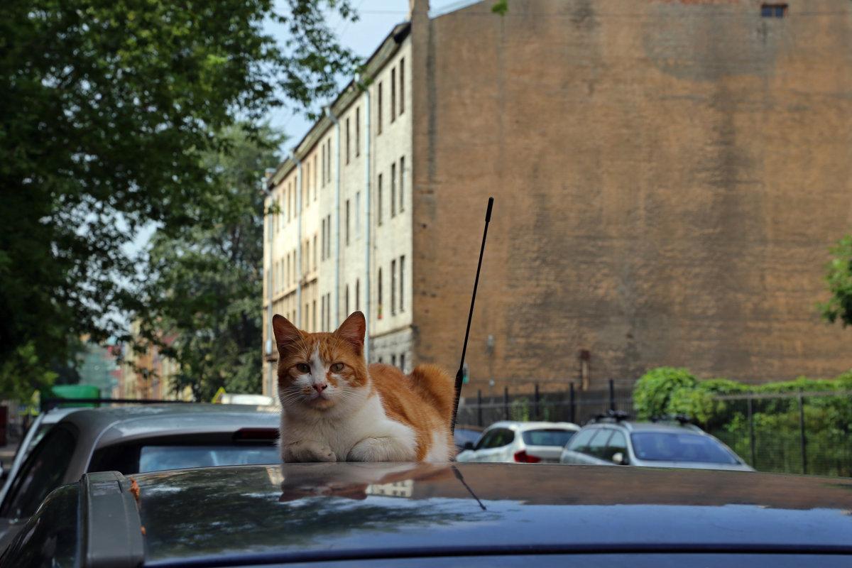 Коты В.О. - Татьяна [Sumtime]