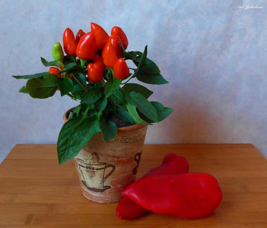 Перцы: жгучий и сладкий - Nina Yudicheva