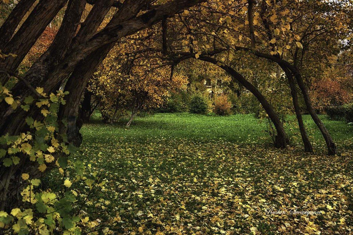 осень!!!!!!!!!!! - סּﮗRuslan HAIBIKE Sevastyanovסּﮗסּ