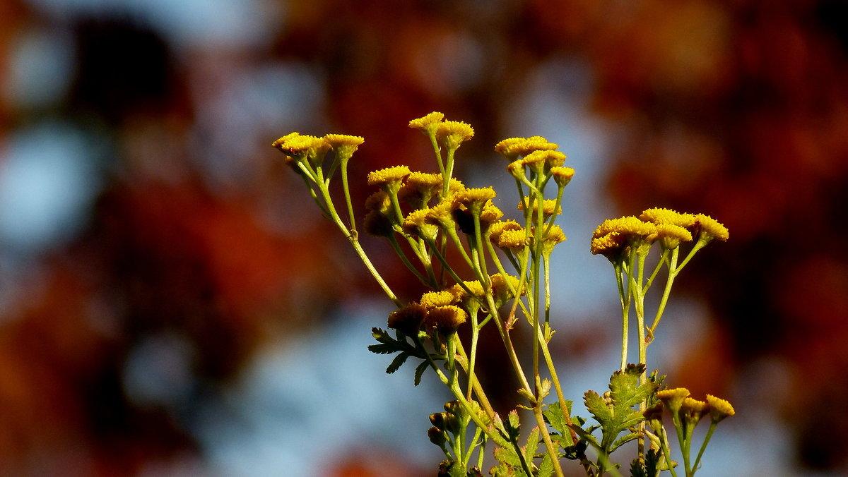 цветы осени 1 - Александр Прокудин