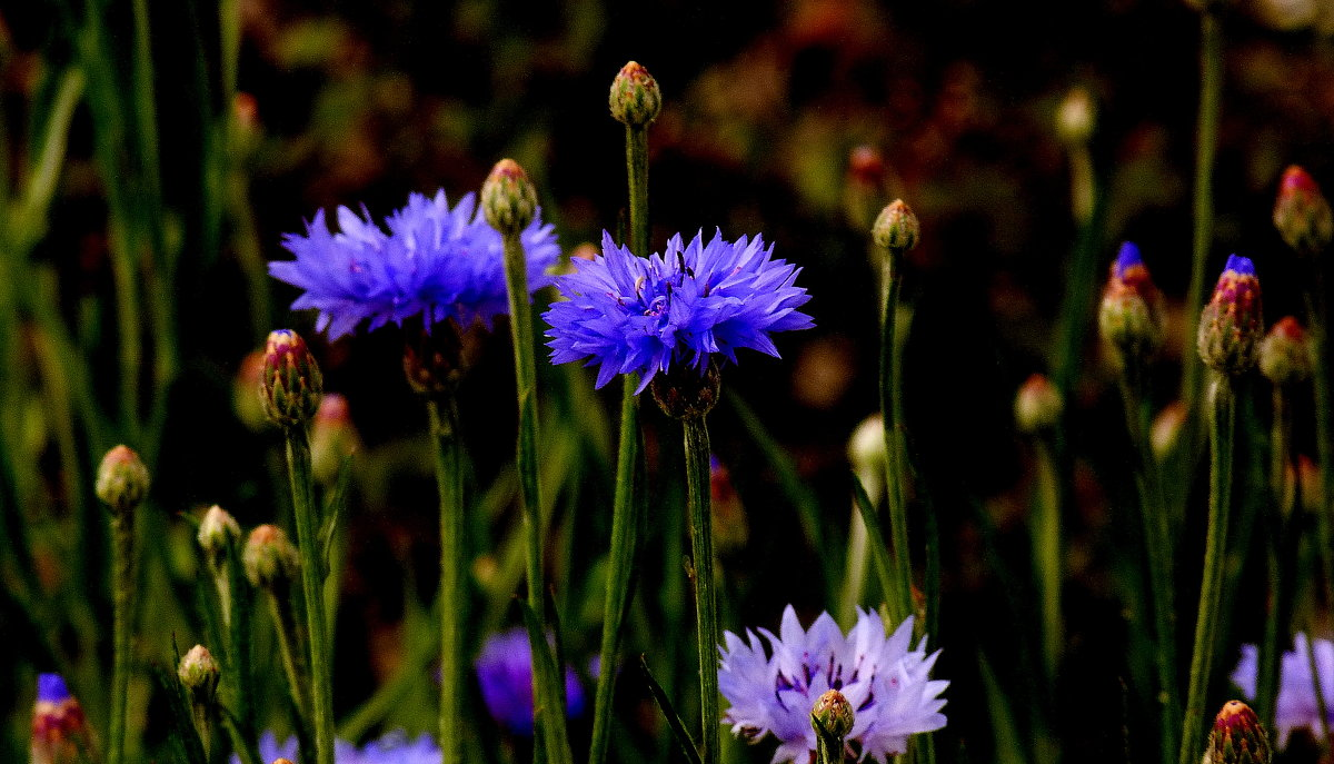 цветы осени 3 - Александр Прокудин