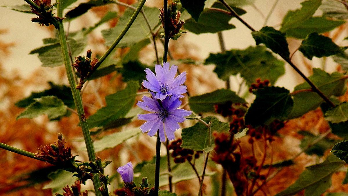 цветы осени 4 - Александр Прокудин