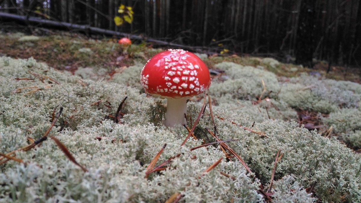 Вот такая красота в лесу - Оксана Романова