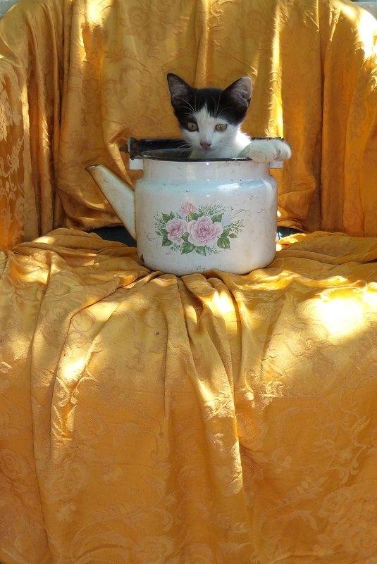 кошачий чай скипел - Ксения смирнова