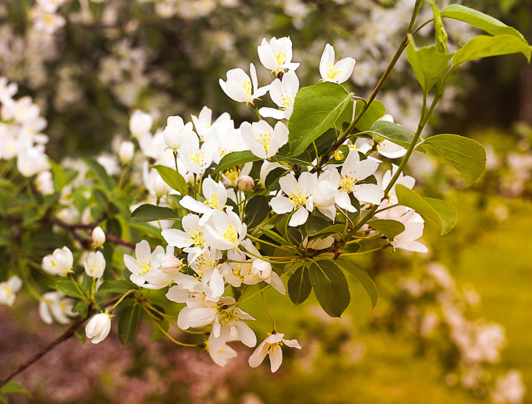 цвет весны - Ирина Корнеева