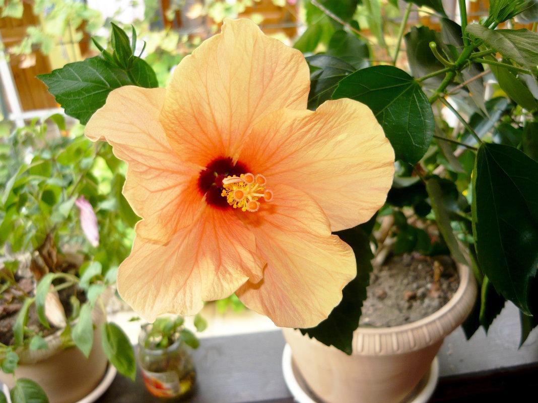 Цветочек - Надежда