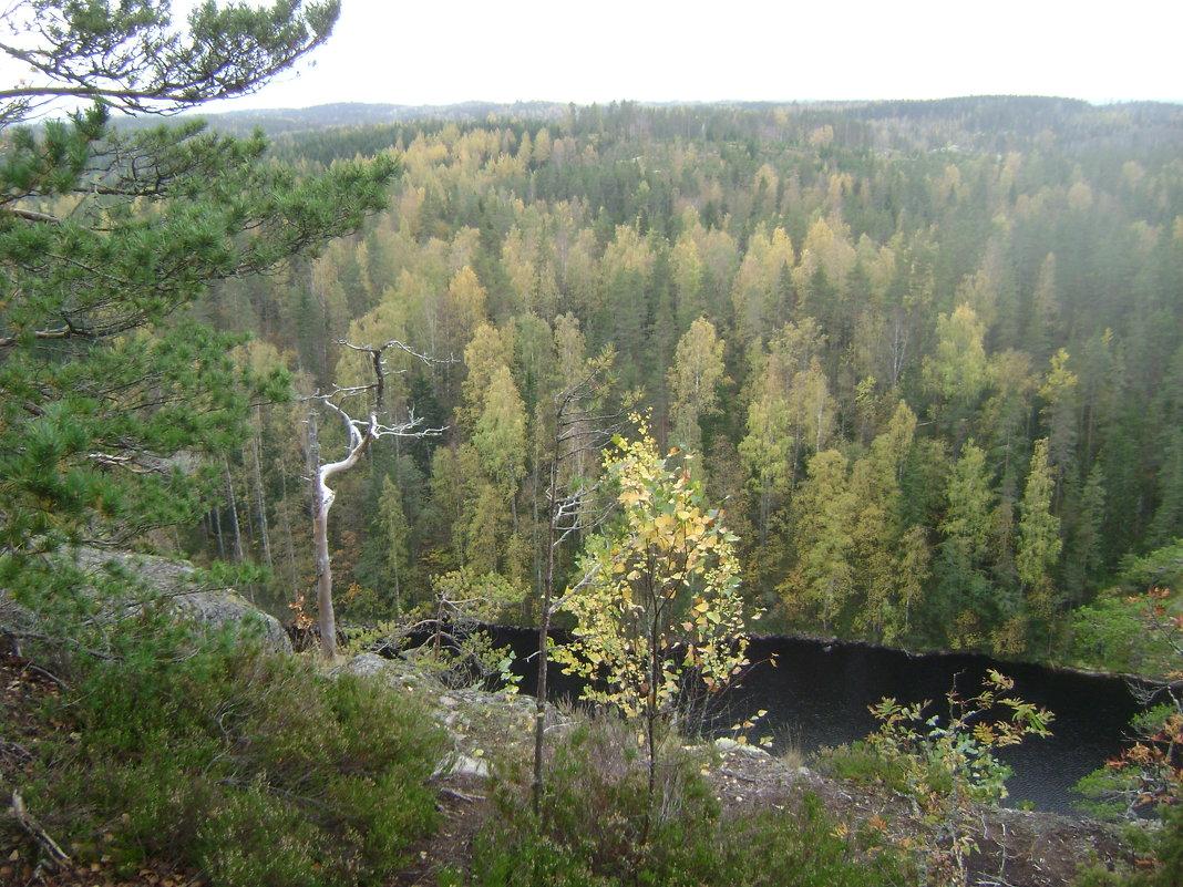 Леса Финляндии - Марина Домосилецкая