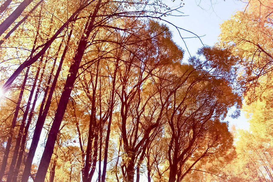 Золотая осень - Лариса Димитрова