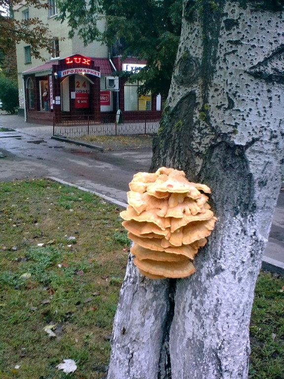 из жизни деревьев (симбиоз) - Галина Pavel