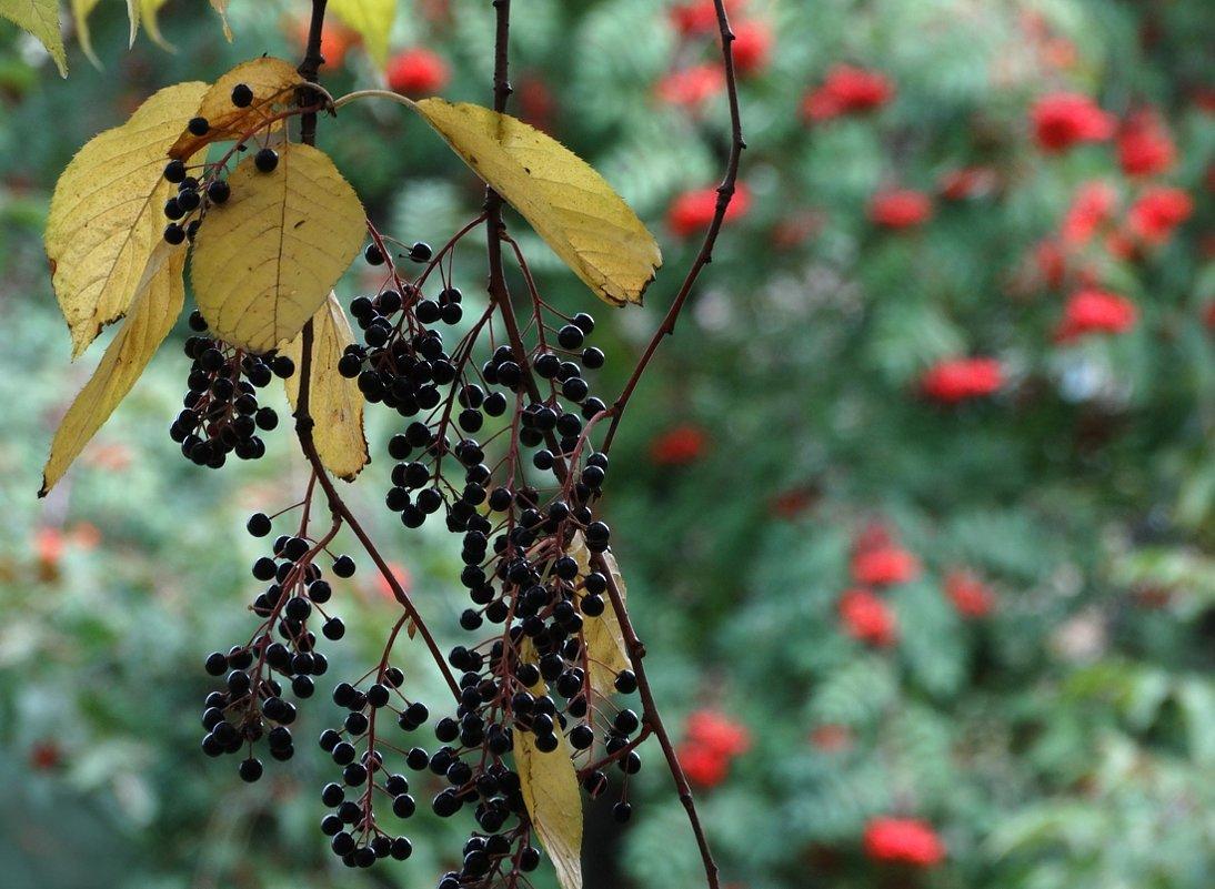Красно-чёрная осень - Валерий Чепкасов