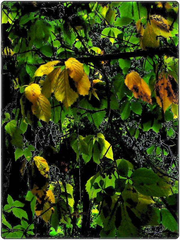 Листья дикого винограда - Нина Корешкова