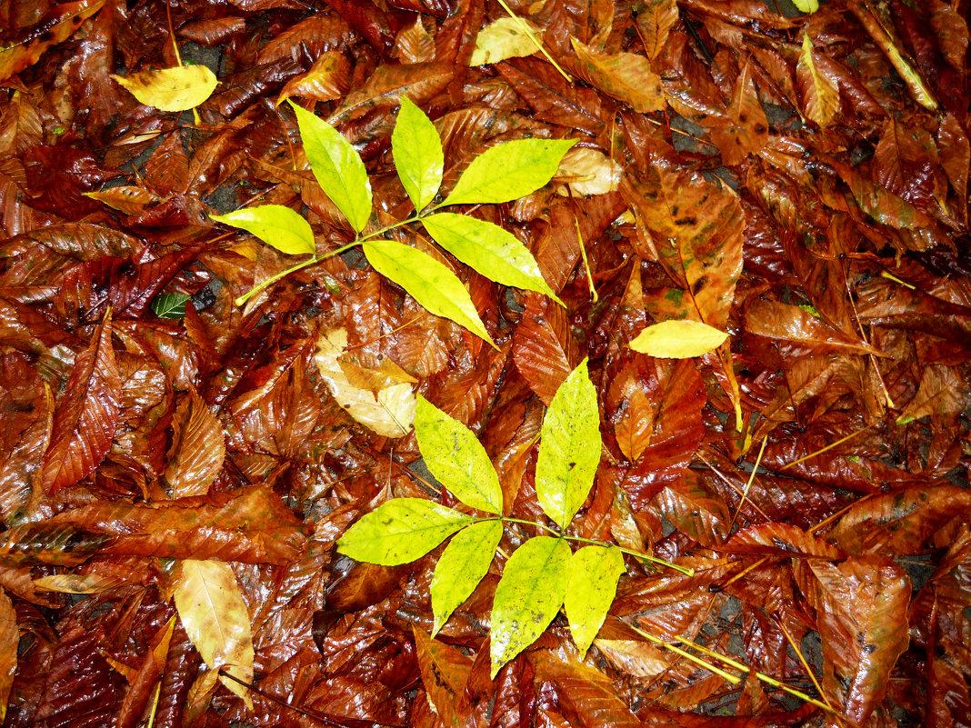 Первый дождь, желтый лист-осень начинается! - Надежда