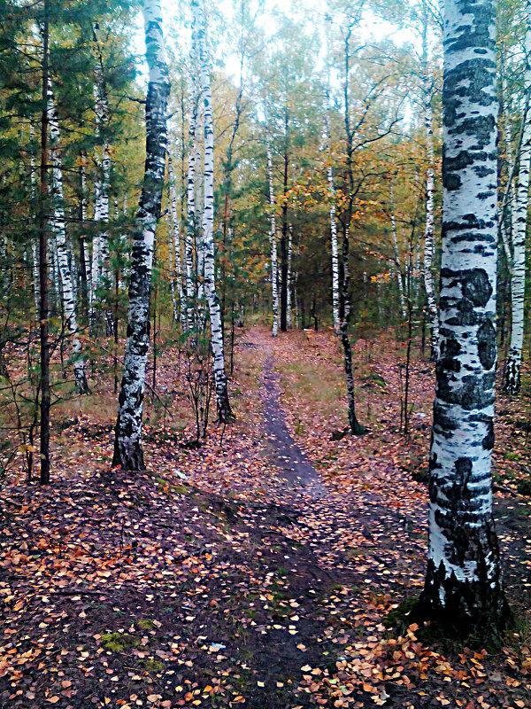 ....в осеннем лесу - александр дмитриев