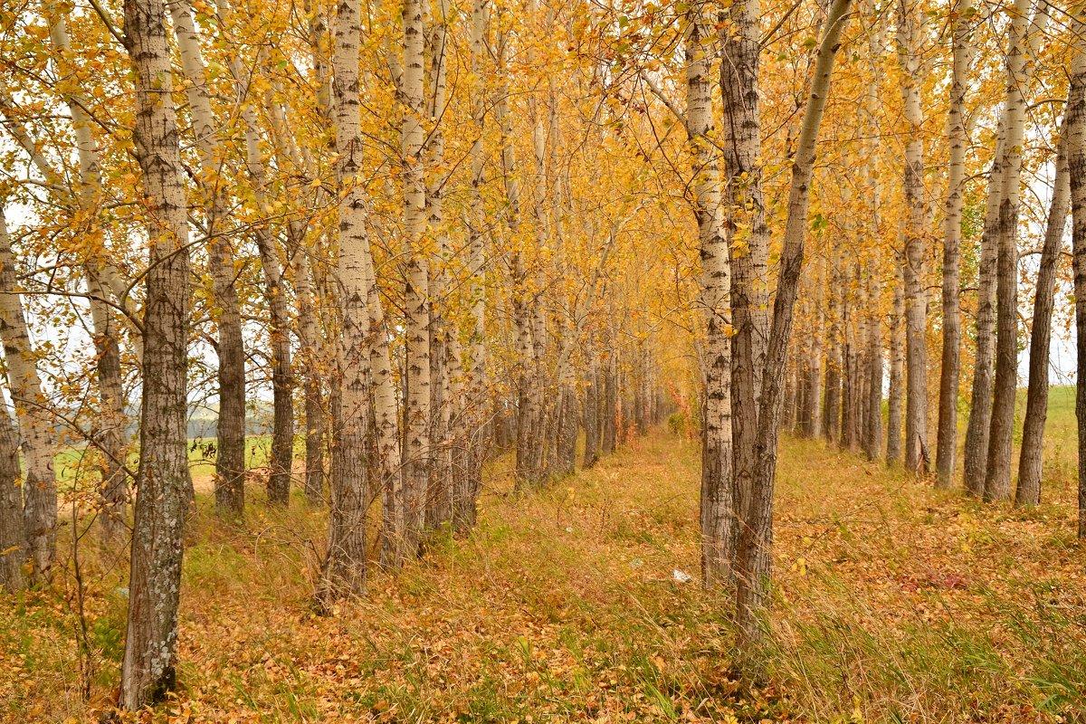 осень. - petyxov петухов