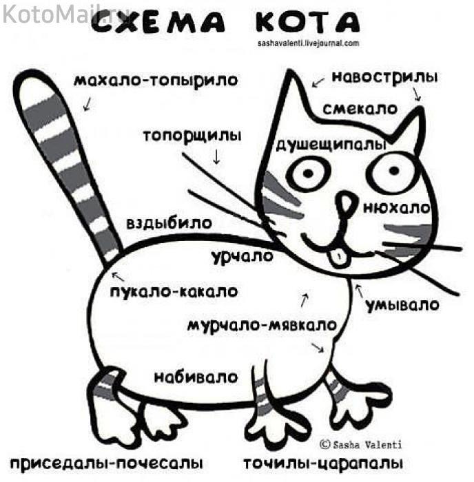 Полное гы!!!! - kolyeretka