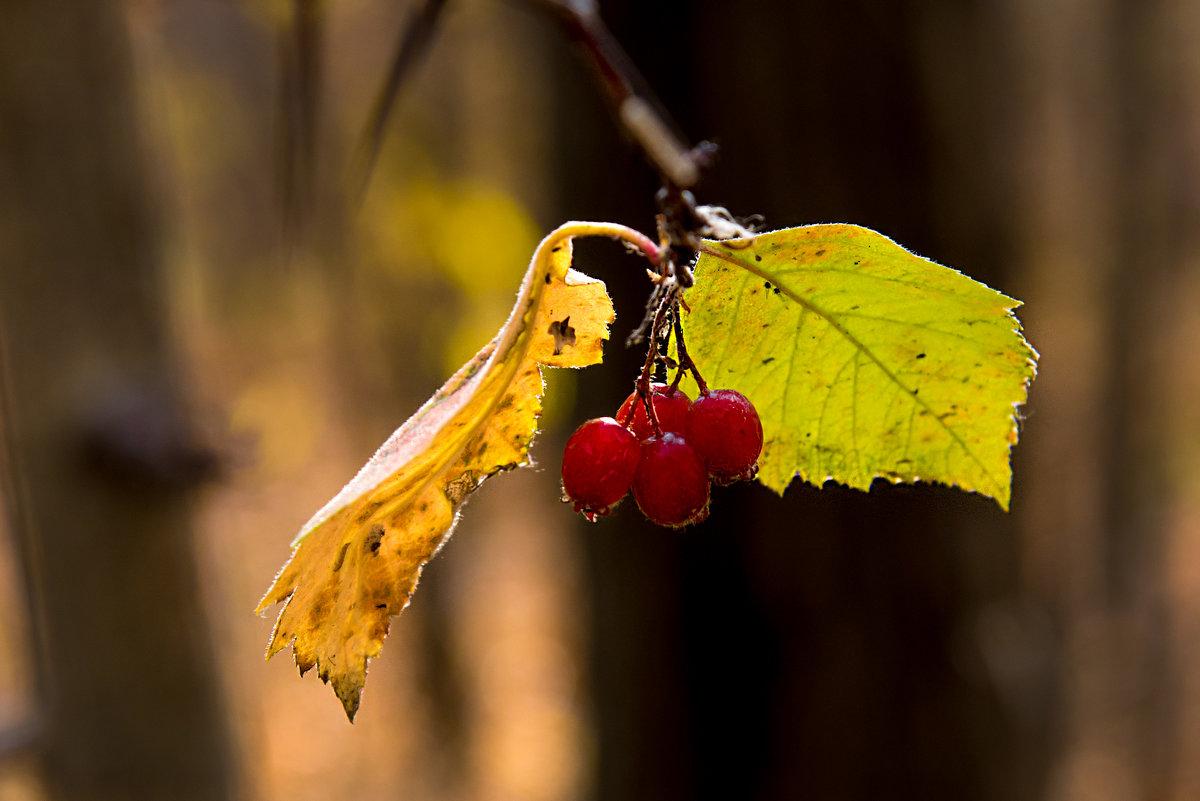 Осень - Александр Маркелов
