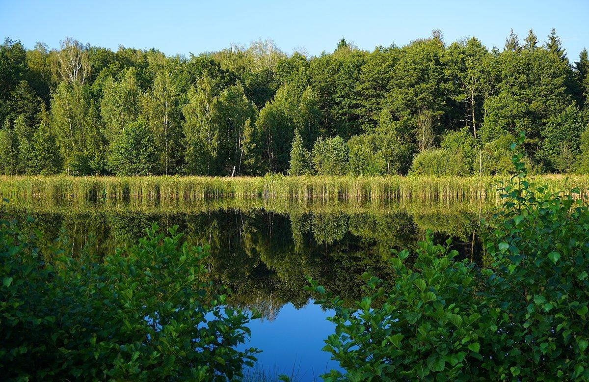 Озеро Плянта - Ольга Чистякова