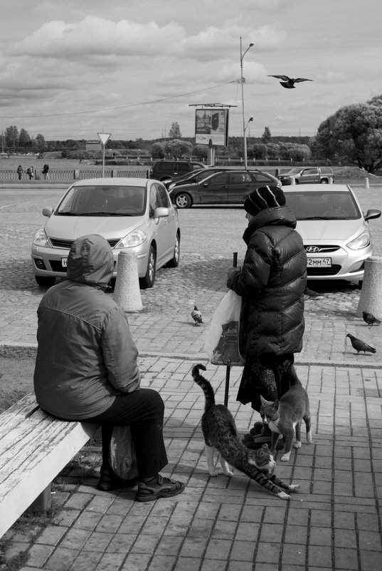 Кошки и местные жители - Семья Фоменковых